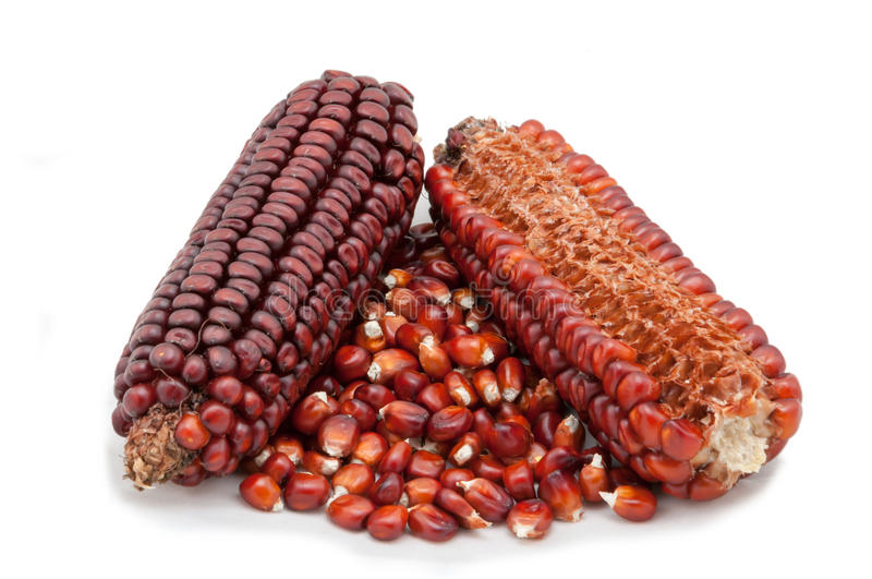 Corn cobs and seeds stock images