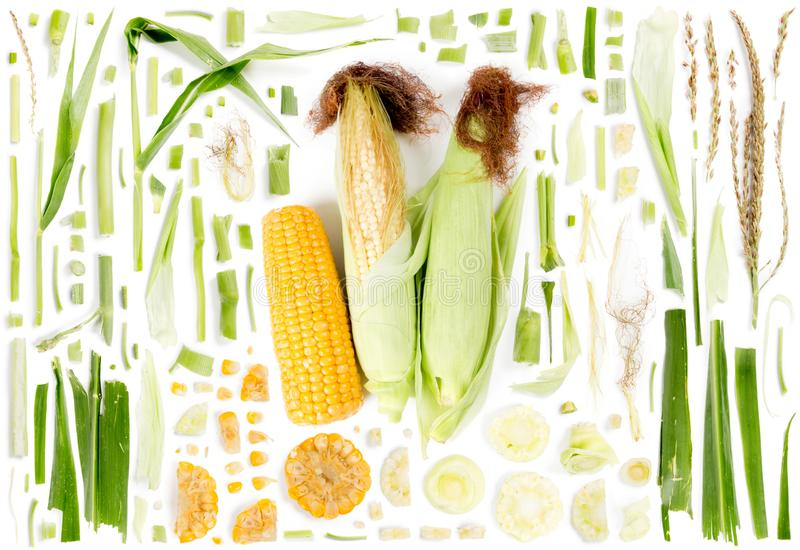 Corn Slice and Leaf Collection stock photography