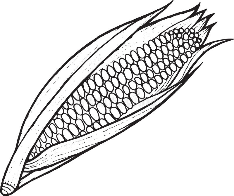 Corn Coloring Page Hand Drawn Illustration Stock Vector
