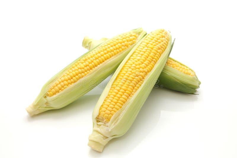 Corn in the ear