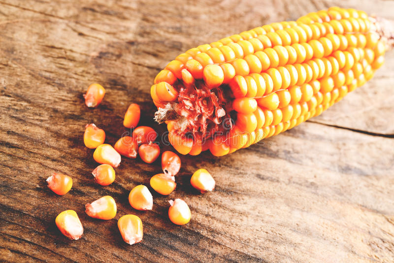 Download Corn stock photo. Image of maize, gold, golden, grain - 36909872
