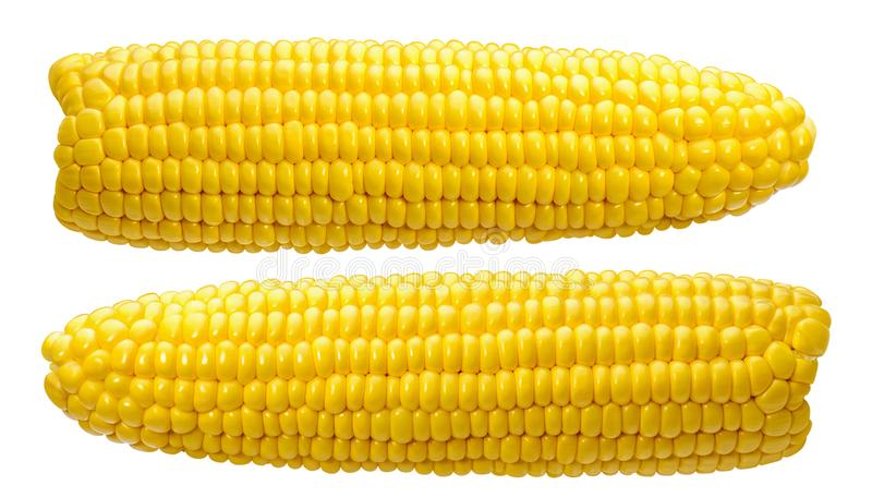 2 corn ears no leaves isolated on white stock photos