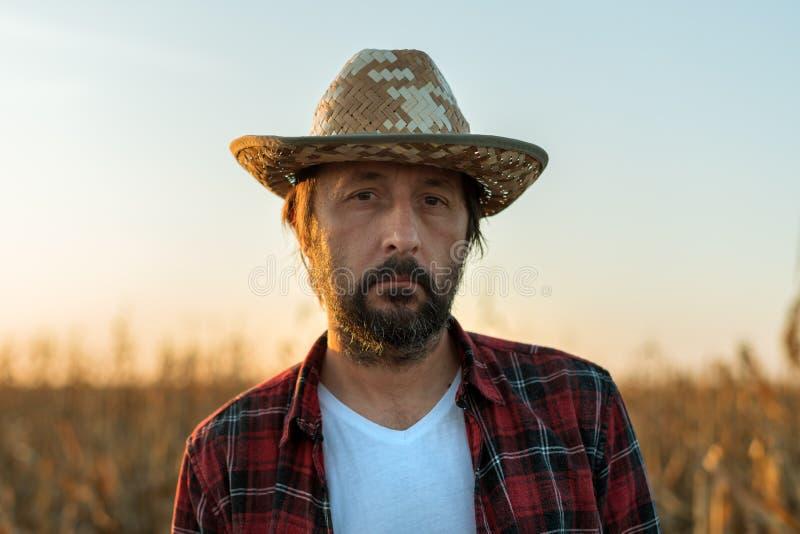 Corn farmer portrait in ripe field stock photos