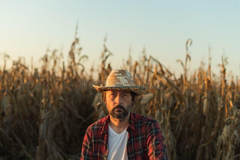 Corn farmer portrait in ripe field stock photo