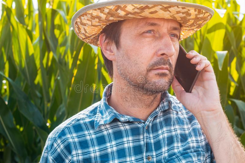 Corn farmer talking on mobile phone in crop field stock photo