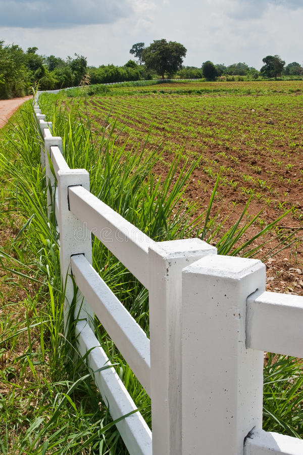Download Corn Field Royalty Free Stock Images - Image: 10447069
