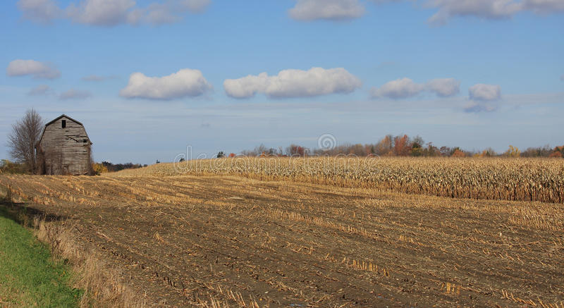 Download Corn Field stock photo. Image of impoverished, farm, dilapidated - 11514750