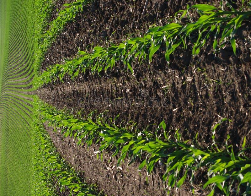 corn field στοκ φωτογραφίες