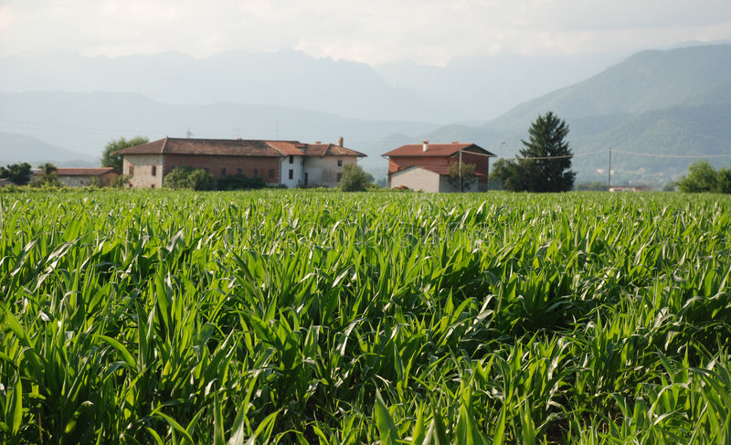 Download Corn Field And Farm 1 Royalty Free Stock Photography - Image: 6945617