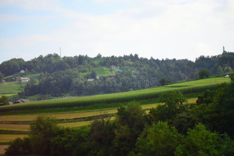 Corn field on hills landscape Slovenia Europe. Field with corn by Åentjurij na Dolenjskem village seen from A2 motorway-Dolenjska avtocesta -E70 European royalty free stock images