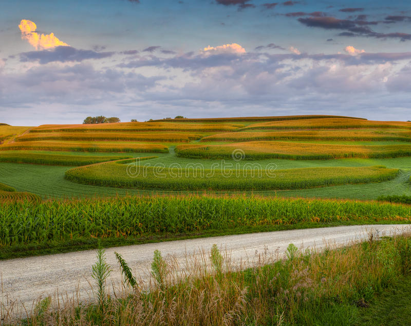 Download Corn Field Patterns And Gravel Road Stock Image - Image: 23730485