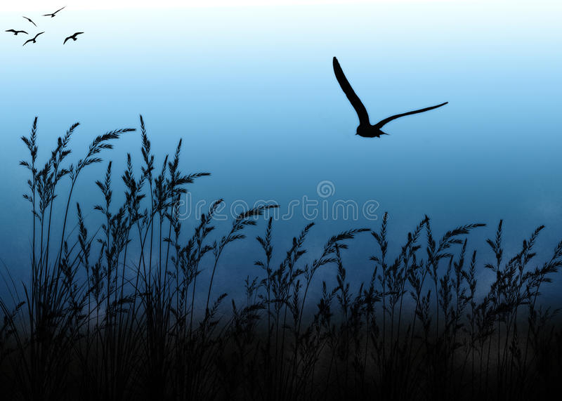 Lonley Crow and Wheat Field royalty free stock photography