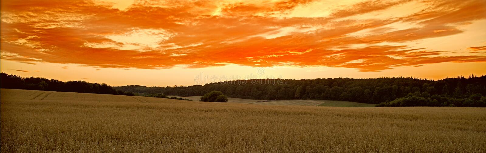 Corn field at sunset stock images