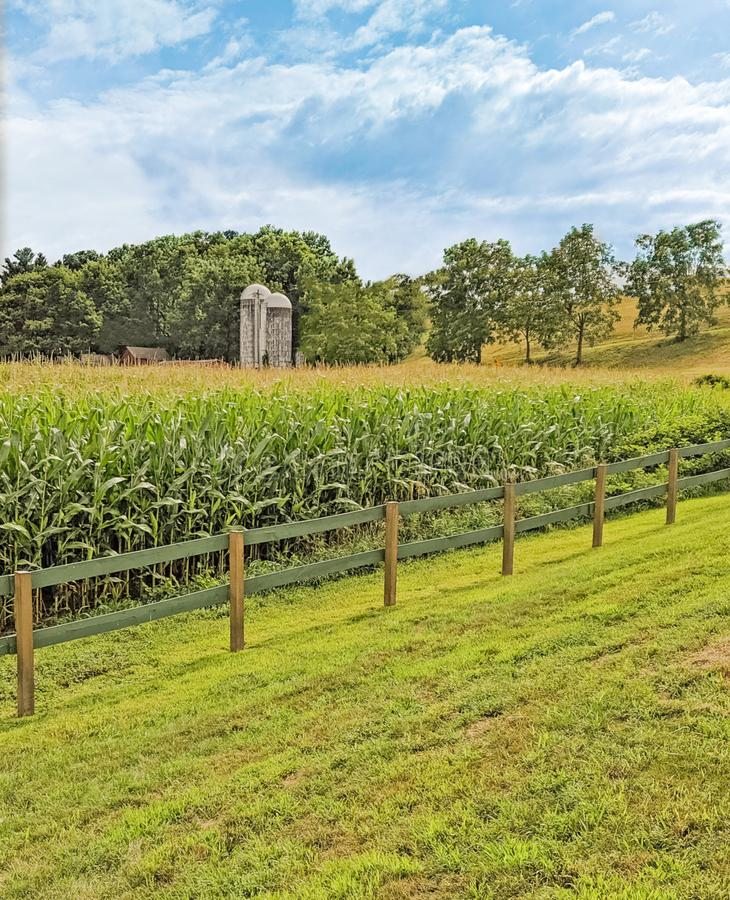 Corn field and two silos. Corn field  in Summer growth and two silos behind wooden fence, blue sky and clouds upstate rural New York stock photography