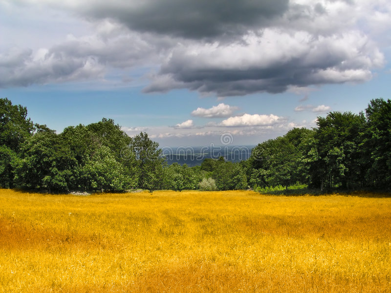 Corn field under heavy clouds. Corn field and trees under heavy clouds stock photo