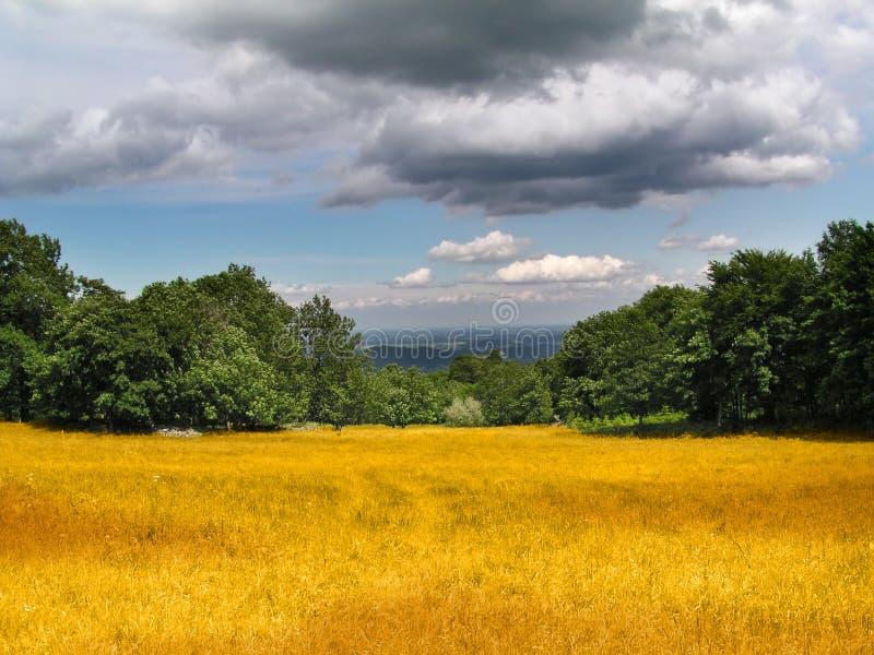 Corn field under heavy clouds stock photo