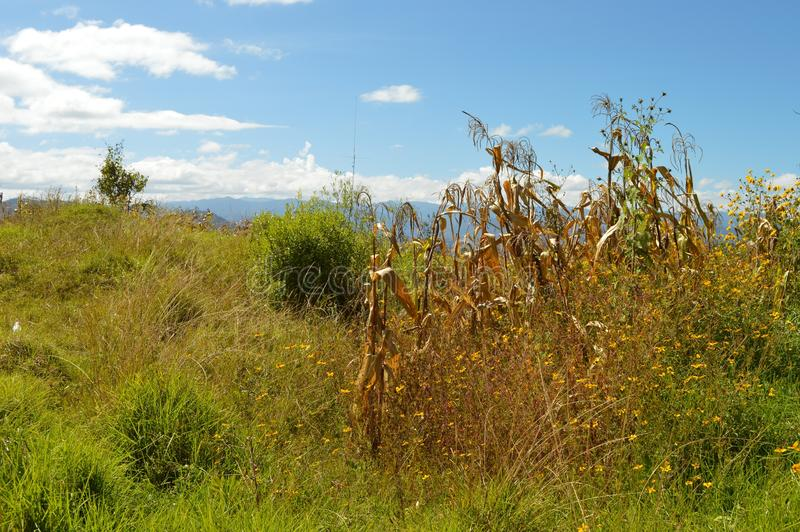 Corn fields in Capulalpam de Mendez in the highlands of Oaxaca stock images