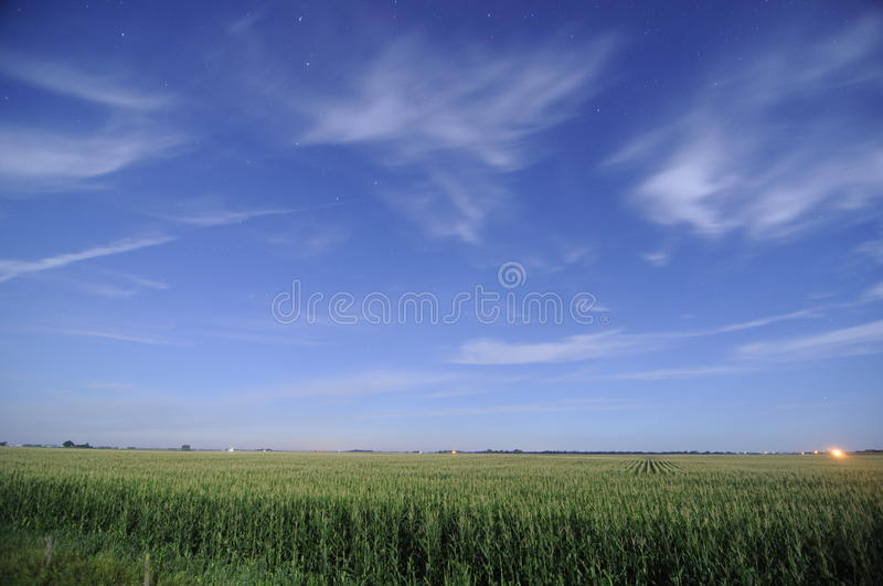 Corn fields at night in Iowa. During summer royalty free stock image