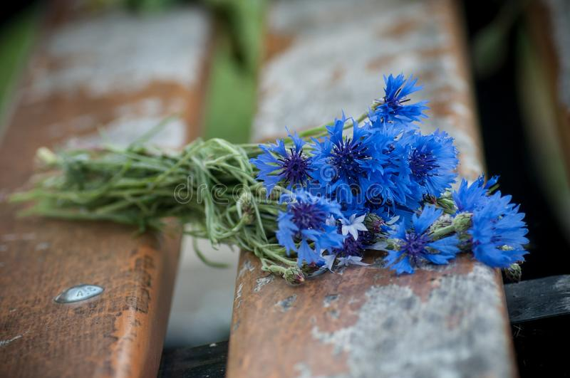 corn flowers bouquet on wooden bench stock photography