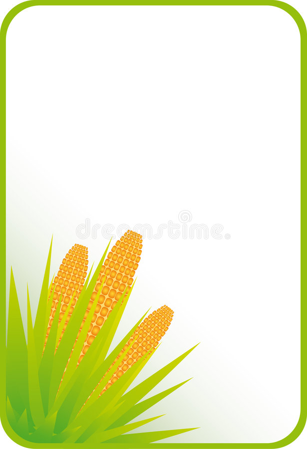 Corn framework. Beautiful framework on a theme about seasonal specificity and a corn crop vector illustration