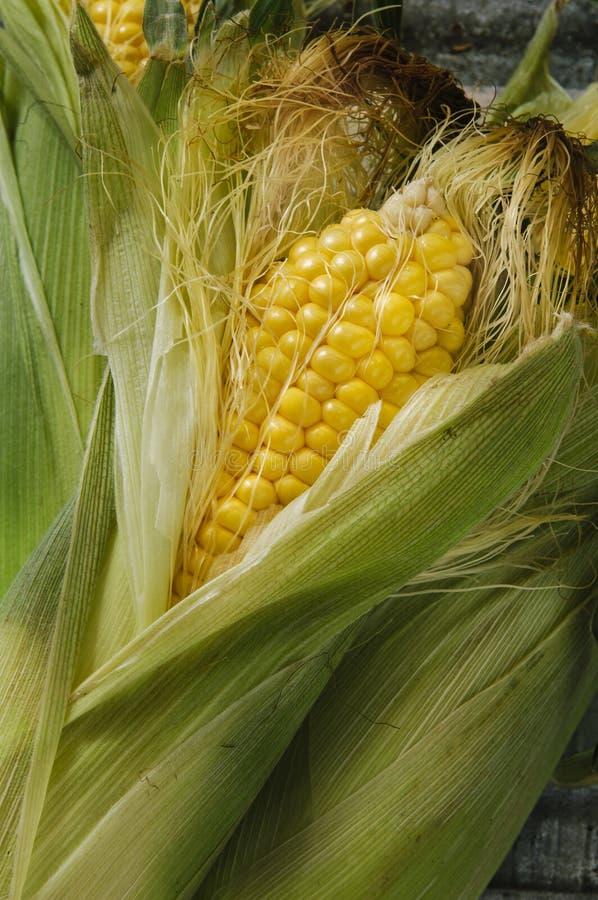 Download Corn stock image. Image of yellow, fruit, flavor, healthy - 36139777