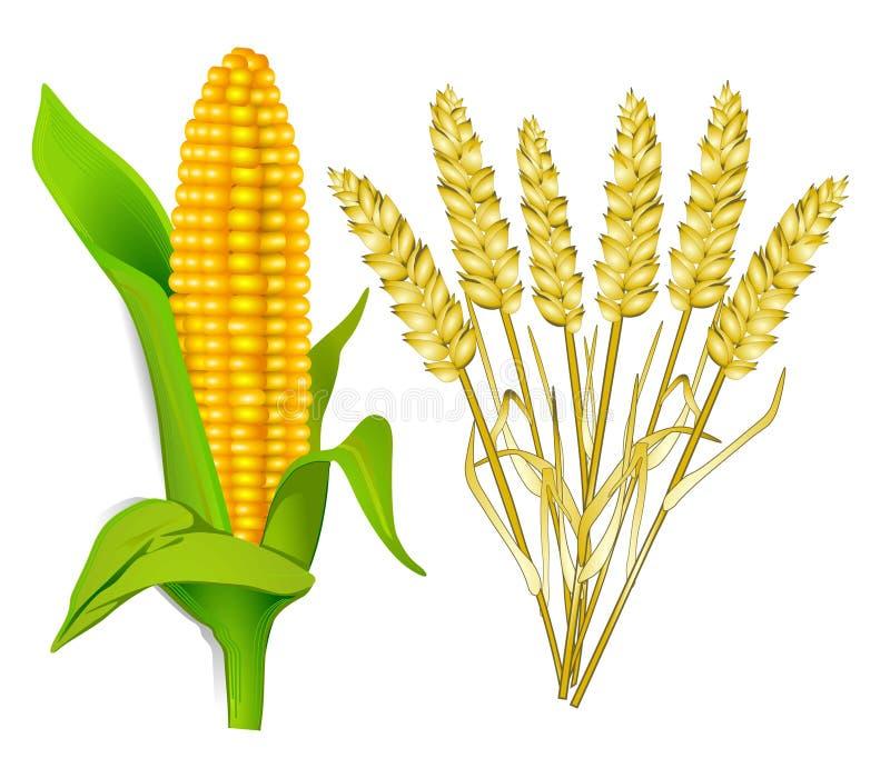 Download Corn and grain stock vector. Image of foodstuff, nutrition - 17017310