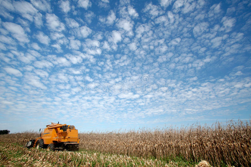 Corn harvest stock photography