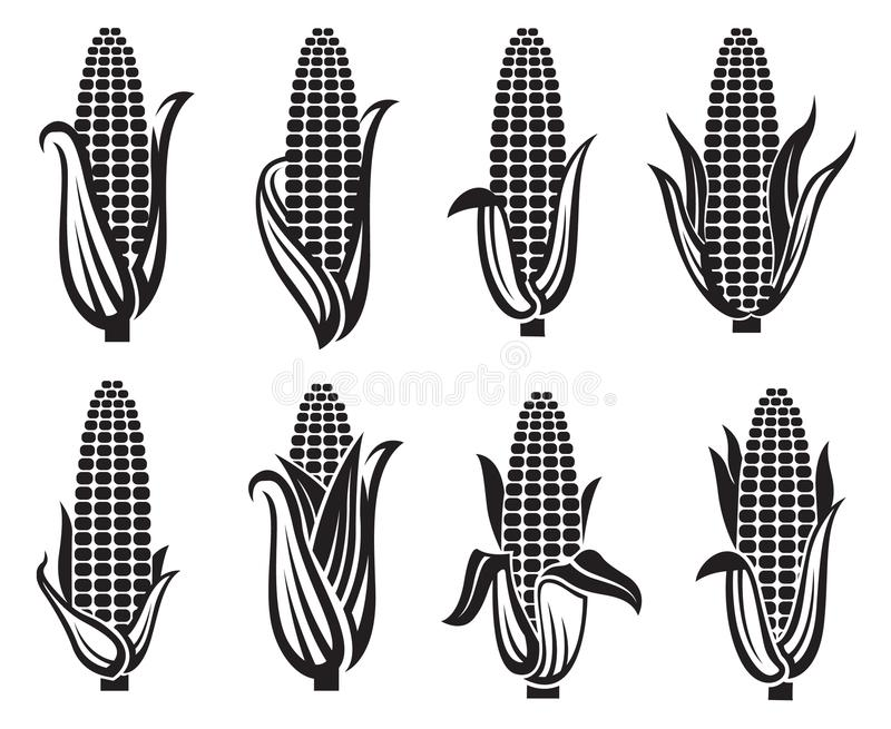 Corn images set. Collection of black corn images stock illustration