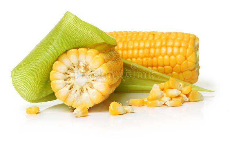 Corn isolated royalty free stock photo