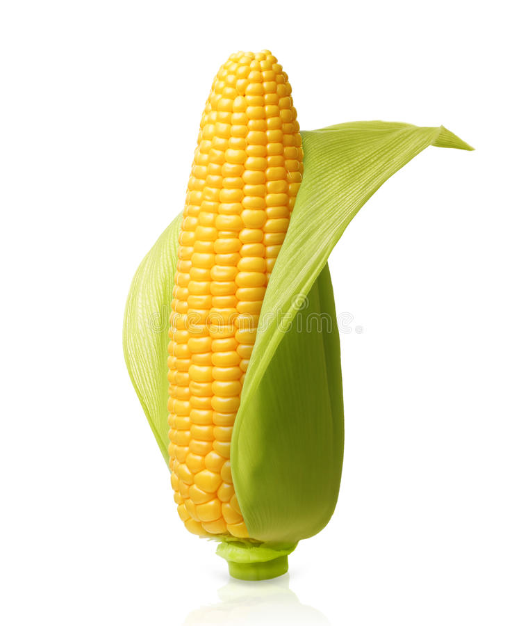 Download Corn isolated stock image. Image of maize, corn, healthy - 59329765