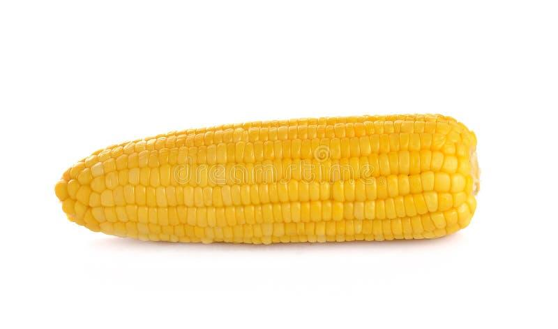 Corn isolated on white background royalty free stock photos