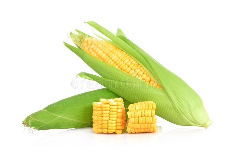 Corn isolated on white background. royalty free stock images
