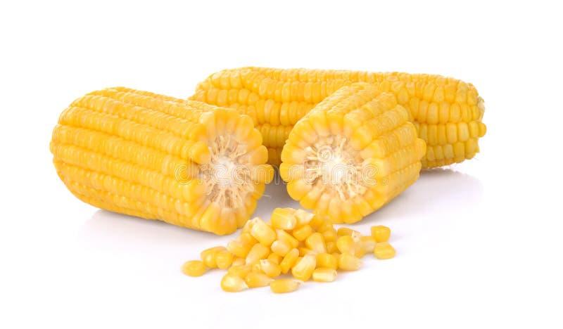 Corn isolated on white background. royalty free stock photo