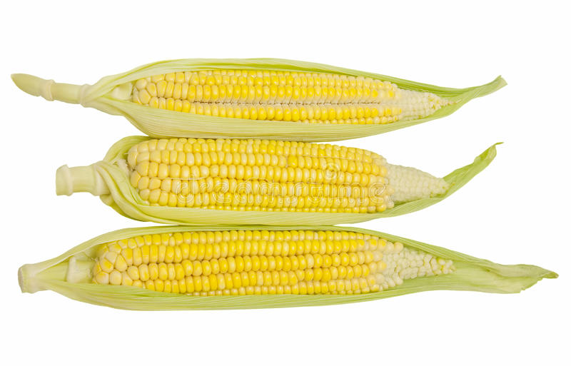 Download Corn Isolated On White Background Stock Image - Image of background, food: 26292163