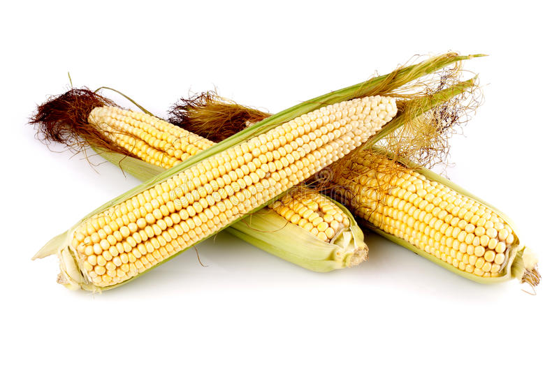 Download Corn stock image. Image of three, isolated, corn, fruits - 30178967