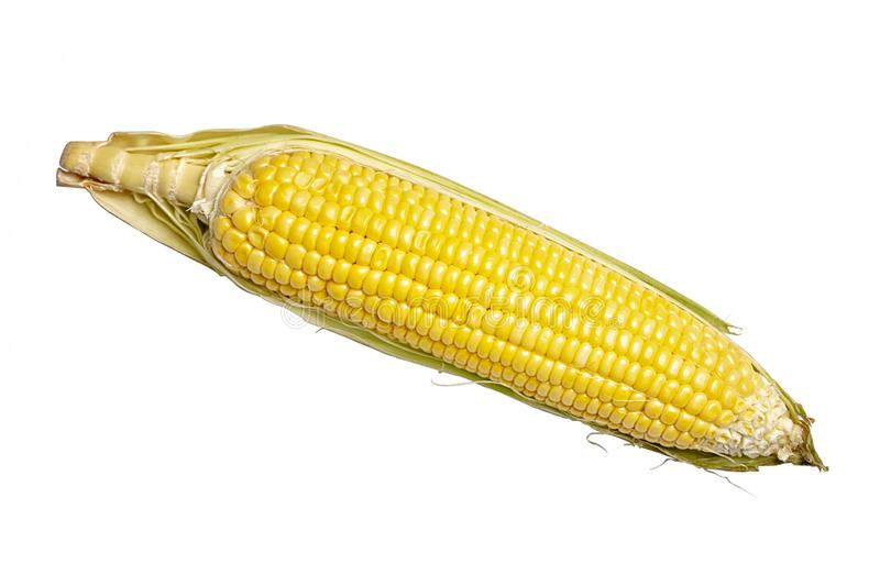 Corn isolated on a white background. Fresh corn cob isolated on white background. stock photo