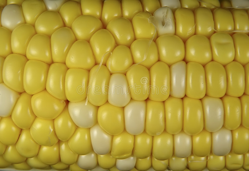 Corn Kernels royalty free stock images