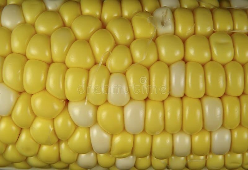 Download Corn Kernels stock image. Image of food, vegetable, corn - 9469