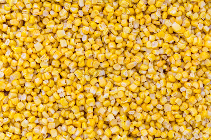 Corn macro as background structure royalty free stock images