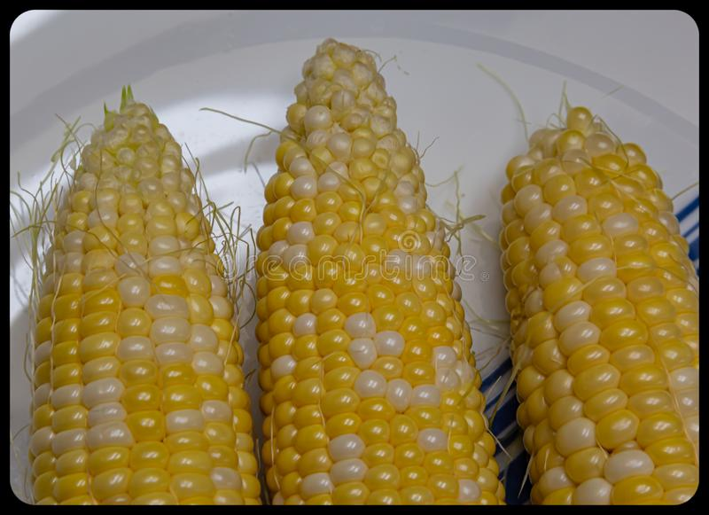 Corn maize on the cob with residual silk attaching to the kernels stock photos