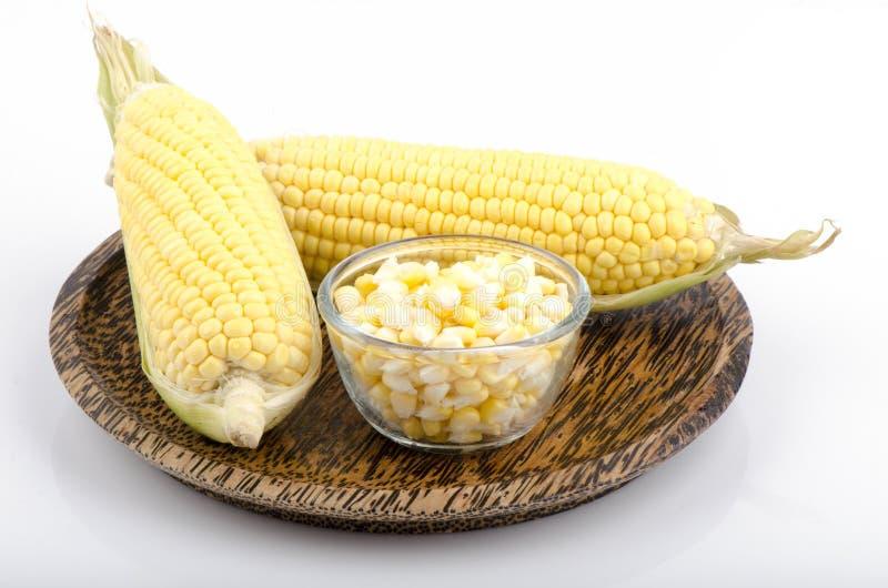 Corn, maize (Zea mays L.) royalty free stock photo