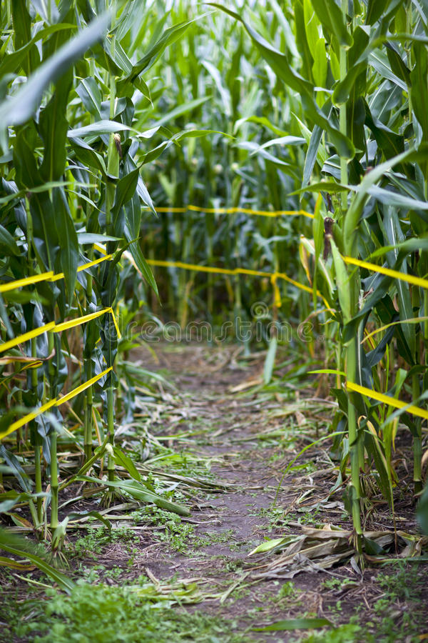 Download Corn Maze Stock Images - Image: 27072404