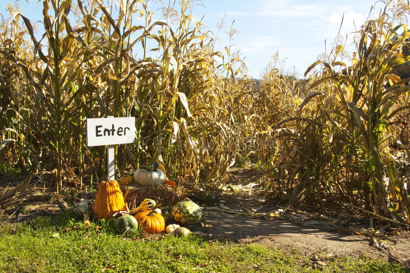 Corn maze stock photo