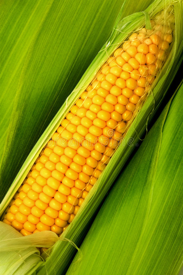 Free Corn On Cob Royalty Free Stock Photography - 9836997