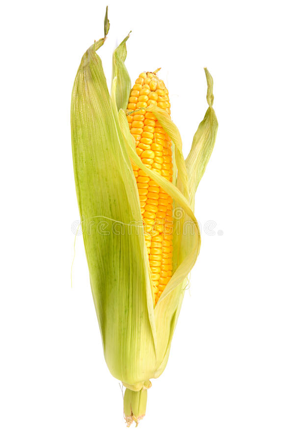 Free Corn On The Cob Stock Photography - 38276512