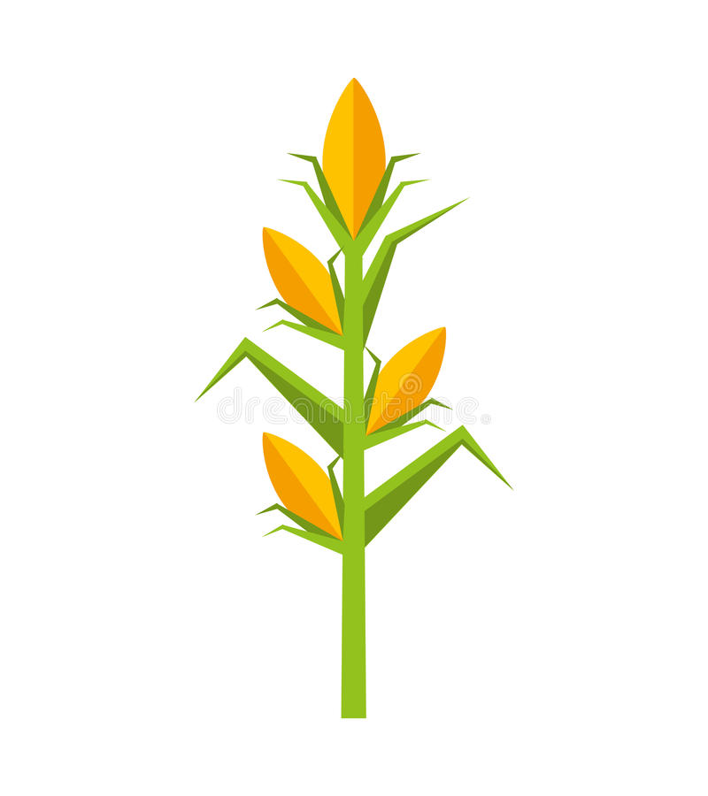 corn plant isolated icon stock vector illustration of background rh dreamstime com plant vector protection plant vector free
