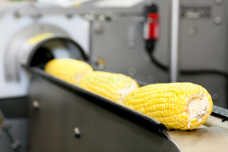 Corn production in the rails stock images