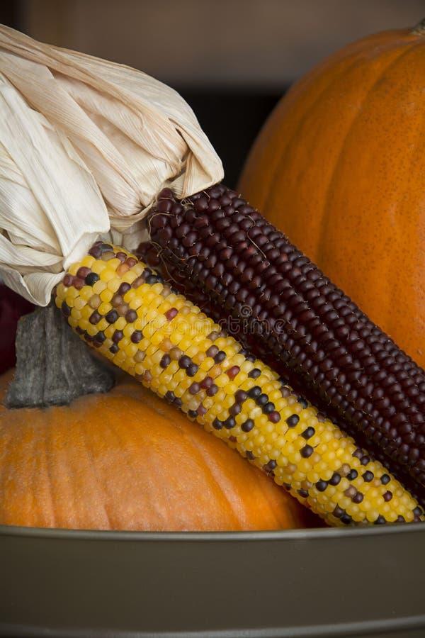 Corn and pumpkins stock image