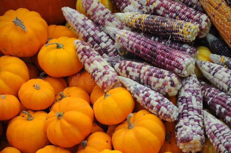 Corn and punkin royalty free stock photos
