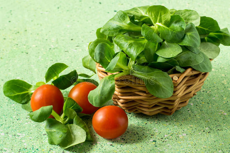 Corn salad (salad Rapunzel, lamb's lettuce) and tomatoes. Corn salad (salad Rapunzel, lamb's lettuce) in a wicker basket and tomatoes on a green background stock images